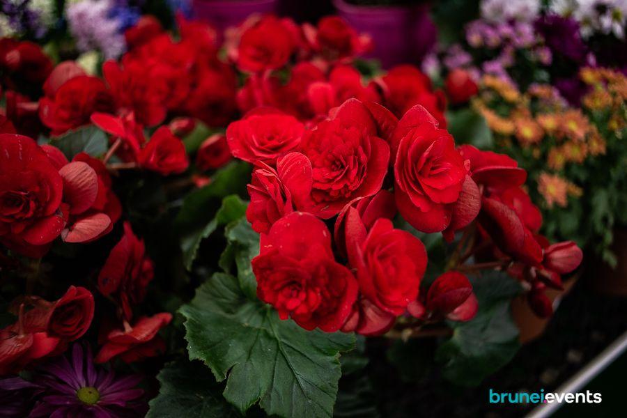 Experience the flowers at the first-ever Brunei International Flower Show.